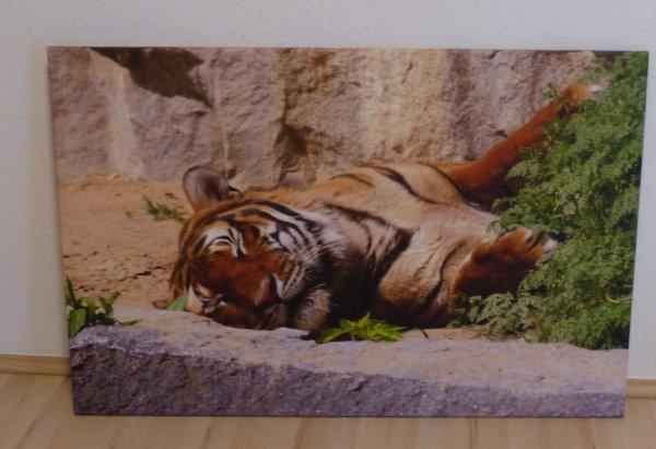 [meinxxl] Foto Leinwand 120 x 80 cm für nur 20 Euro + Versand statt 119 Euro