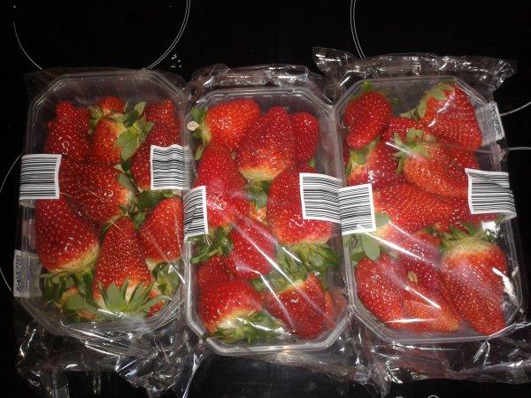 [Lokal] Leipzig 3 Schalen Erdbeeren 1,00 €