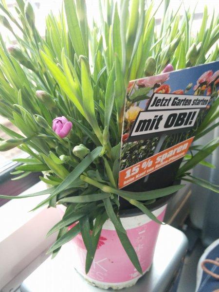 Lokal Hannover, Gratis Blumen am HBF
