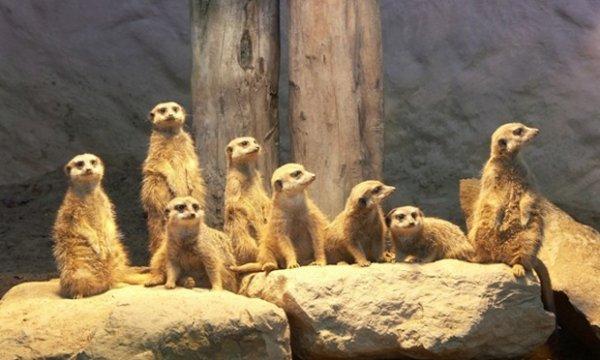 Zoo Osnabrück - Tageskarte für 2 Erwachsene und 2 Kinder (3-14 Jahre) für 35,40 € statt 59 € @ Groupon ( + Qipu möglich)