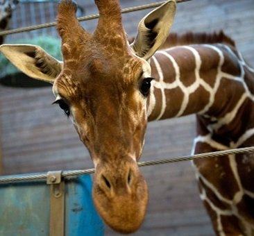 Tageskarte für den Kölner Zoo für 6,25€ @ Socialdeal.de (64% Ersparnis) *Wieder verfügbar, günstiger durch 2,50€ Gutschein*