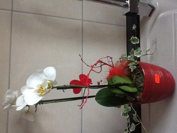 [Lokal Ratingen] Orchideen im Ratio Gartencenter