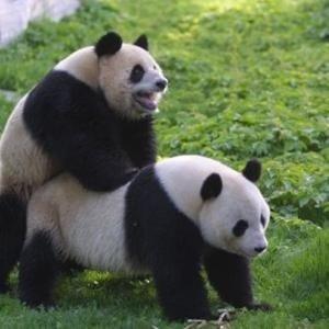 Fast Gratis Tierpark Schönbrunn für 1 Lotterielos statt 16,50€