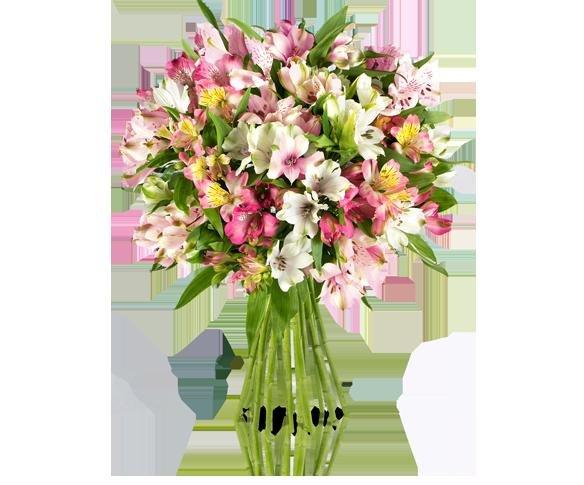 [Miflora] viele Aktionssträuße ab 14,90€ z.B. Pink Paisley | Rosen ab 17,90€
