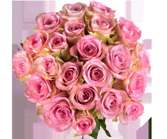 [Miflora] 20 Rosen (Alessa) für 17,90€ und viele andere