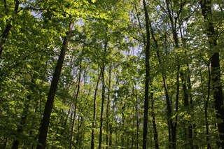 Köln :  Führung durch den Urwald in Köln - Worringer Bruch ( Waldnaturschutzgebiet) am 15.8.2015 um 10 Uhr