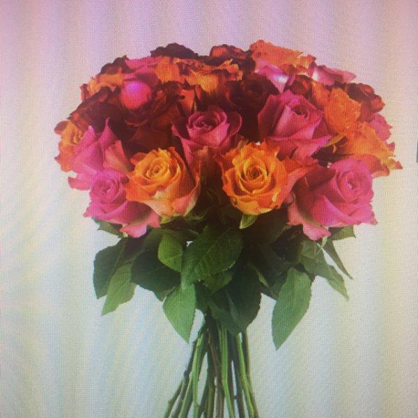 25 Rosen bei Miflora online
