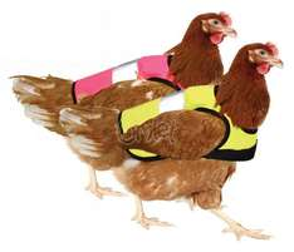 [ Must Have ] Warnweste für die Hühner im 2er Pack (Reaktion auf den WC Sitz mit Spülung)