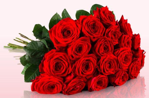 20 rote Rosen bei Miflora für 12,95€ + 4,95€ VSK = 17,90€