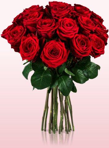 20 Red Naomi Rosen mit großen Blütenköpfen und einer Stillänge von 50cm für 18,90€ inkl Versand @ Miflora