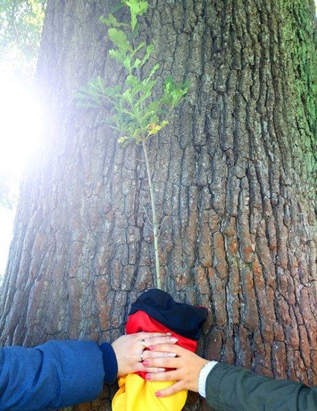 Eichenbaumsetzling im Topf (30 bis 40cm) nur 7.91 zum Tag der Einheit