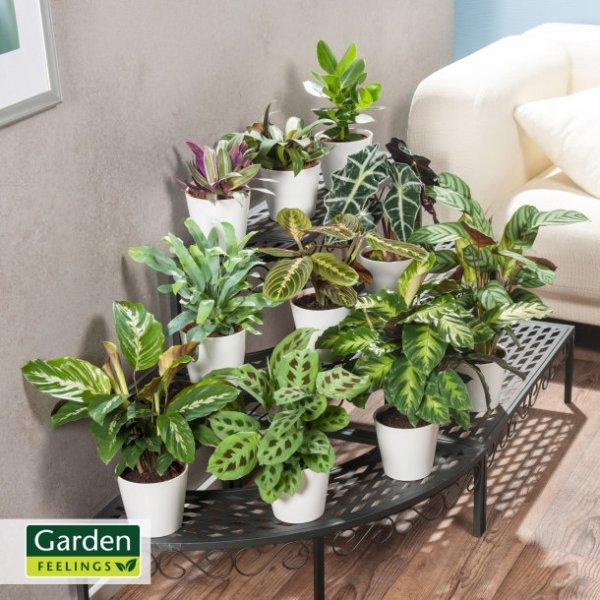 [Aldi Nord] Grünpflanzen incl. Topf