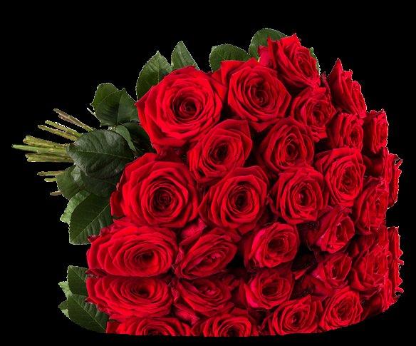 [Miflora] 20 rote Naomi Rosen (50cm Stillänge) für 19,36 Euro