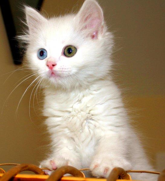 Katzenstreu Cat´s Best Öko Plus 2 x 40 Liter für 34,68€ @Zoofast