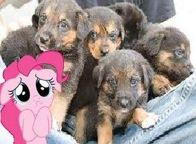 Charity 4 Dogs (Kostenlose Hundefutter Probe + 500kg Spende an ein Tierheim)