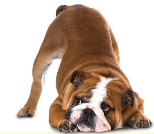 GRATIS Nahrungsergänzung für Hunde