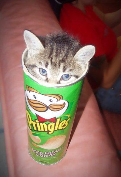 [Kaufland] Pringles für 1,11€ (Berlin&BB, MV,S & S-A, Thüringen)