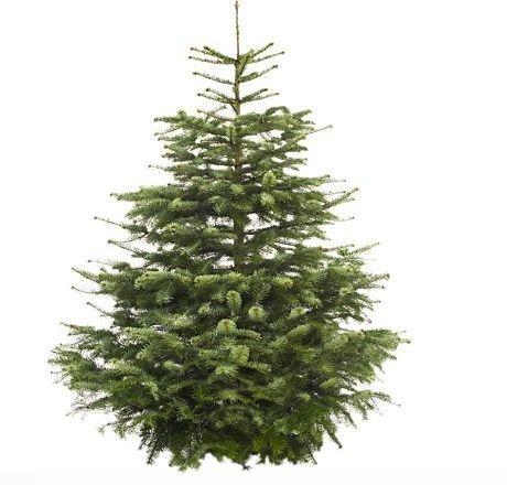 Weihnachtsbaum Nordmanntanne Premium 100 - 125 cm für 25,99€ inkl. Versand bei GartenXXL