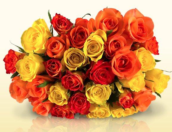 Miflora Autumn Colors für 20€ - 30 orange und gelbe Rosen @ Miflora