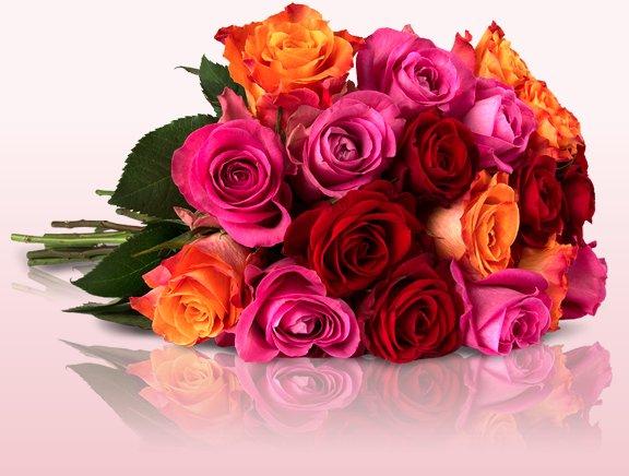 Cyber Monday 20 Rainbow Rosen für 14,90€ @ Miflora + 6€für 40 Rosen