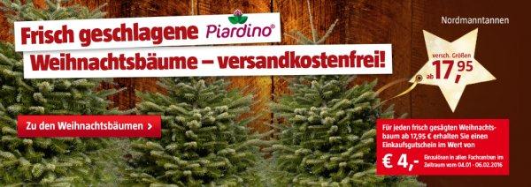 Nordmanntanne 125-150cm + 4€ Einkaufsgutschein versandkostenfrei für 17,95€ Bauhaus oder in der Filiale abholen