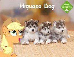 Kostenlose Hundefutter Probe (Hiquaso Dog)