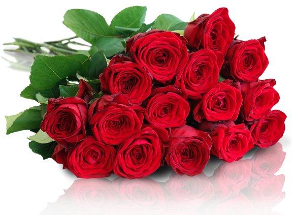15 Red Naomi Rosen für 17,90€ @ Miflora *UPDATE* jetzt 16,61€ durch Gutscheincode