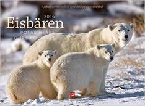 Amazon: Eisbären Kalender 2016 Ackermann 32% reduziert