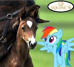 """Kostenlose """"Equine 74"""" Futterprobe (Pferdenahrungs Ergänzungsmittel)"""