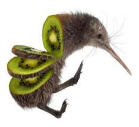 [Lokal Edeka Nordost] Bio Kiwi (Italien) für 15 Cent pro Stück