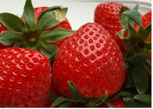 Erdbeeren ,-99 Cent / 250-g-Schale 66% günstiger Kaufland [Lokal!?] Hamburg Altona