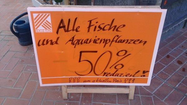 (Lokal offline Düren) Zierfische und Aquarienpflanzen im Hornbach Düren reduziert! z.B. Skalar für 3,50€