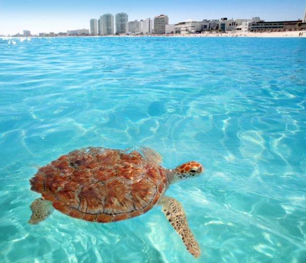[Für Kurzentschlossene] 24. Februar - 7./9. März: Hin- und Rückflüge von Deutschland nach Cancún ab 361€