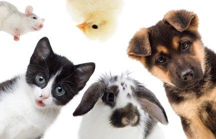 Kleine Angebotsübersicht von Haustierfutter - und Zubehör ohne Supermarktangebote