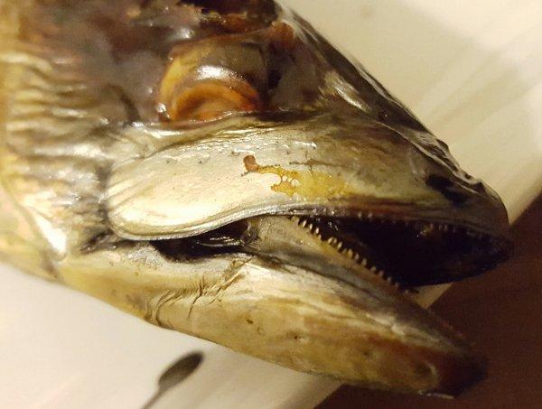 [Lokal] Makrele geräuchert Stk. 2,50€ Rewe Ffm