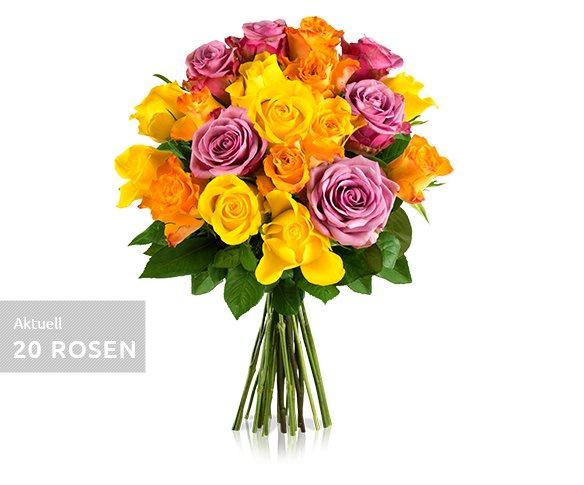 """Ausverkauft - Miflora """"Rosen-Rallye""""  - 26 Rosen für 18,90 EUR inkl. Versand. Der WOW-Effekt 30 Rosen für +1 EUR mehr"""