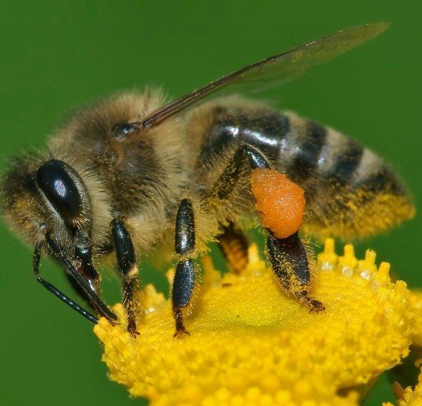 Rettet die Bienen! Gratis Sommerwiesensamen bei allen Raiffeisen-Märkten in Baden-Württemberg und Rheinland-Pfalz