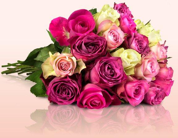 Bright Colours - 25 pastellfarbene Rosen mit 50cm Stiellänge für 18,90€ @ Miflora inkl Versand