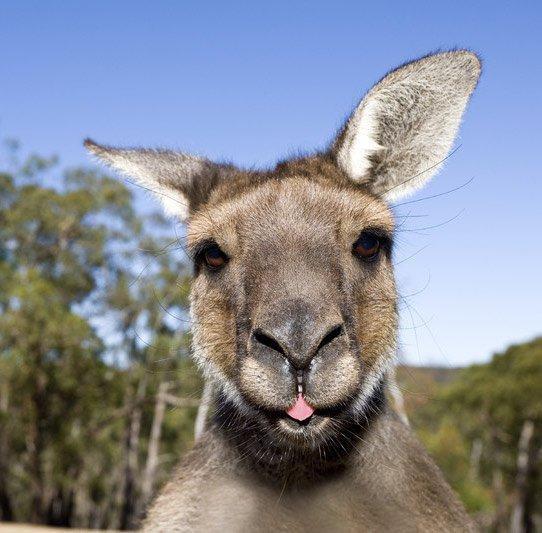 [Mai - Juni, September - November] Günstige Open-Jaw Flüge von einigen europäischen Städten nach Australien (Adelaide) und dadurch z.B. Frankfurt - Adelaide - Frankfurt für 633€