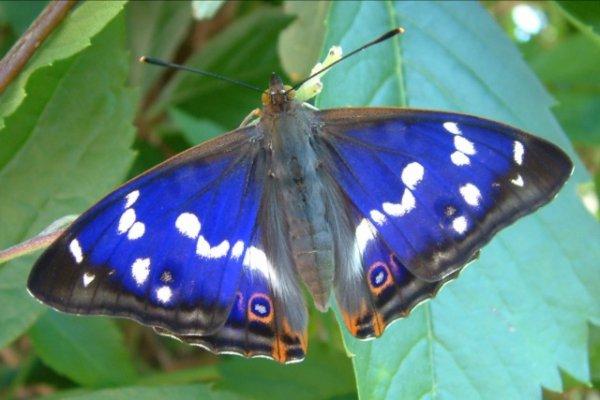 Gratis Retterpaket bestellen -- Werden Sie Schmetterlingsretter*in – lassen Sie ihren Garten erblühen