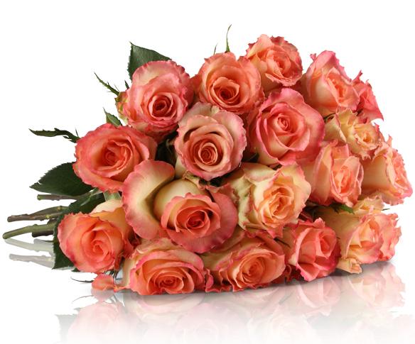 20 roséfarbene Rosen für 18,90€ bei Miflora