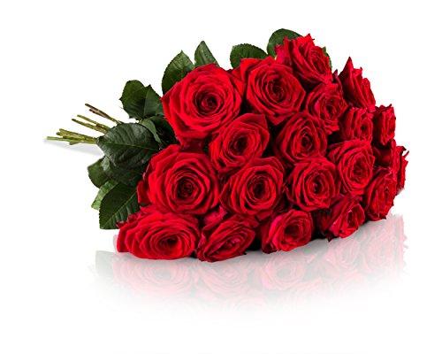 [Amazon Blitzangebot ab 18 Uhr] MIFLORA 20 Rote Rosen mit XXL-Blütenköpfen