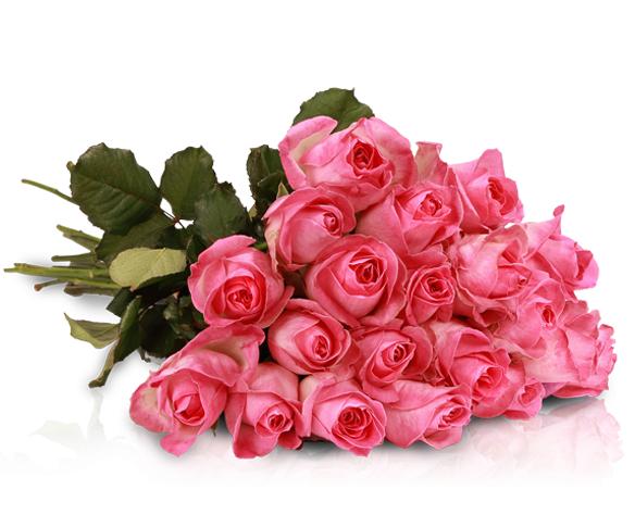 """20 pinke """"Avalanche Candy Rosen"""" für 18,90 € inkl. VSK bei miflora"""
