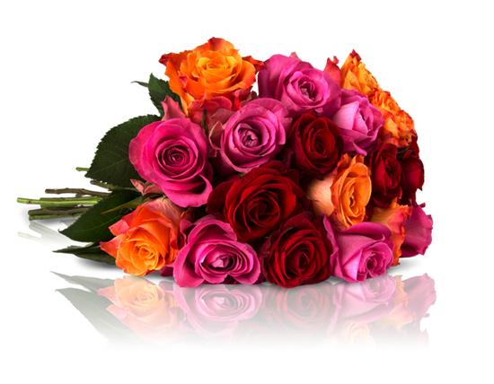 4000 Bestellungen geschafft: Es geht wieder los: die Rosen Ralley bei [Miflora] bis zu 28 Rosen für 18,90€ inkl. VSK