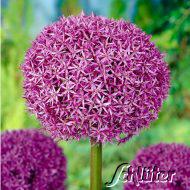 20% Rabatt auf alle Blumenzwiebeln bei garten-schlueter.de