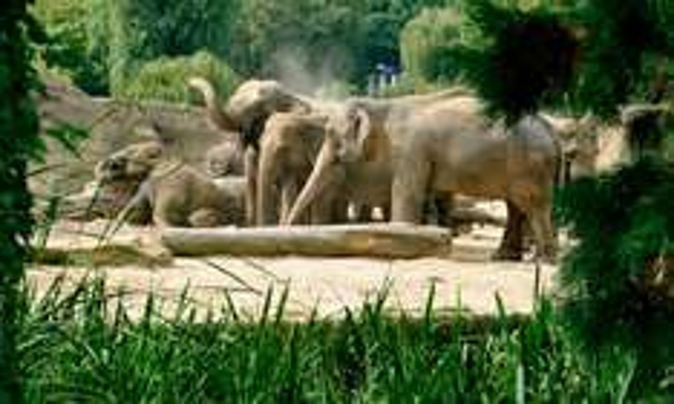 Tageseintritt für einen Erwachsenen in den Kölner Zoo inkl. Aquarium und DIN-A2-Zoo-Poster (44% sparen*)
