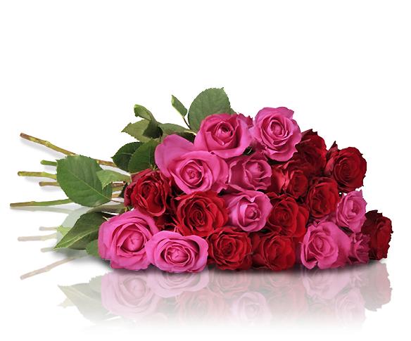 Miflora Rosenstrauß mit 20 rosa-roten Rosen