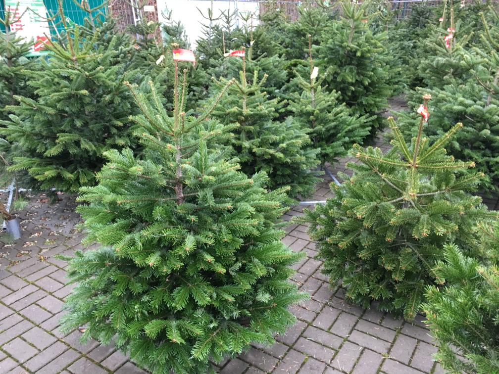 Lokal Neuss Weihnachtsbaum in jeder Größe