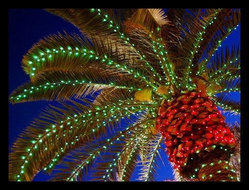 (LTURfly) sehr viele Direktflugangebote auf die Kanaren // super spontan ab 50€ // über Weihnachten ab 75€ // Neujahr 75€ (inkl. Gepäck, Steuern, etc.)