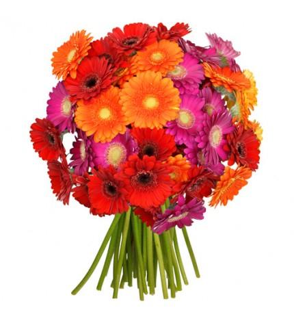 Blume Ideal: 40 Gerbera-Mix  --> 14 Tage Frischegarantie --> 14,99 € (statt 29,95 €) + 4,95 € Versand